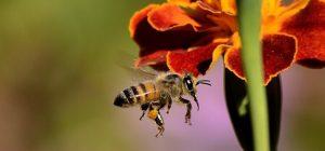 Bee Venom Skincare