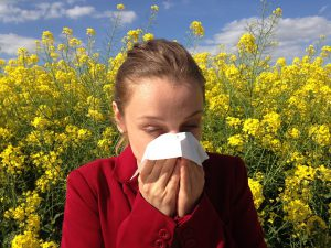 Pycnogenol for allergies